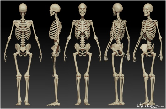 human_skeleton_study_by_meletis-d50zbp1