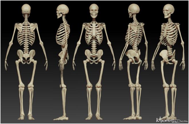 human_skeleton_study_by_meletis-d50zbp1